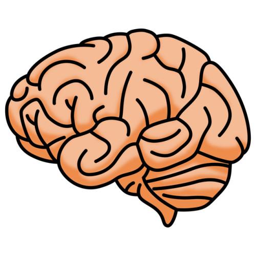 人間の脳の潜在能力とは?「快・痛みの原則」
